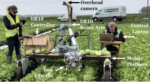 lettuce harvest robot crop