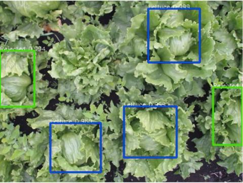 lettuce machine learning